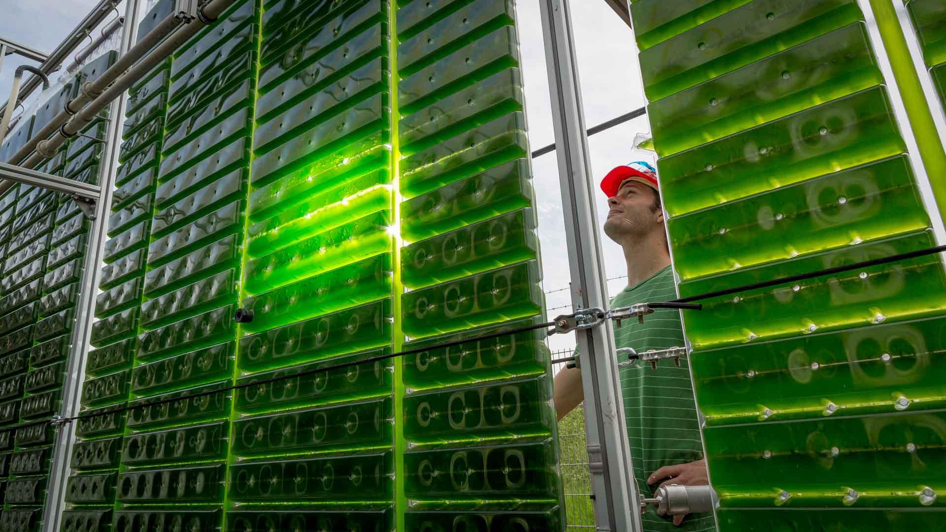 Bioalkohol aus Algen (Crop-Energies)